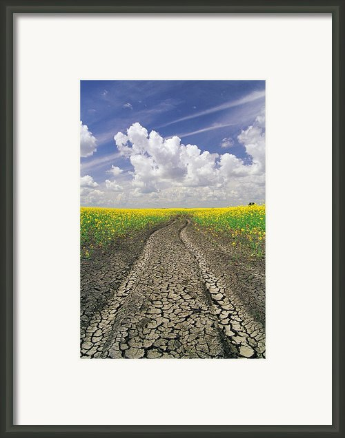 Dried Up Machinery Tracks Framed Print By Dave Reede
