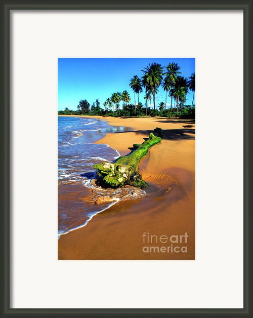 Driftwood And Palm Trees Framed Print By Thomas R Fletcher