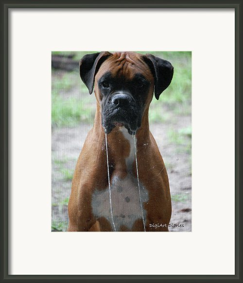 Drool To The Extreme Framed Print By Digiart Diaries By Vicky Browning