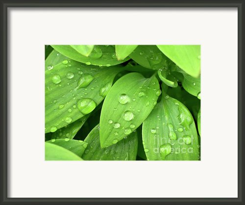 Drops On Leaves Framed Print By Carlos Caetano