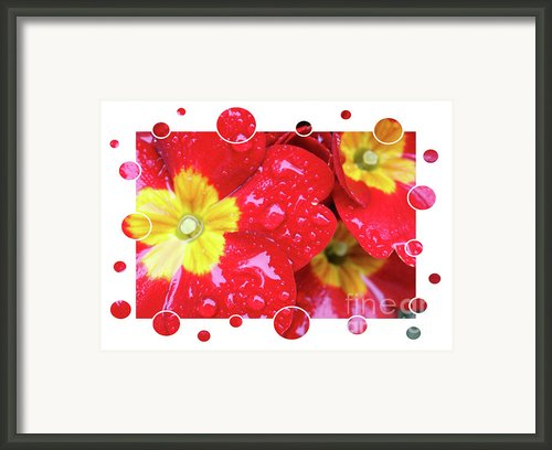Drops Upon Raindrops 4 Framed Print By Carol Groenen