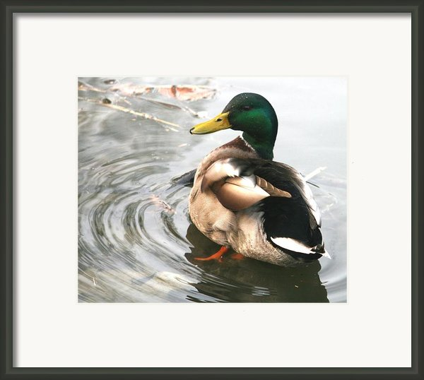 Duck Beauty Framed Print By Valia Bradshaw