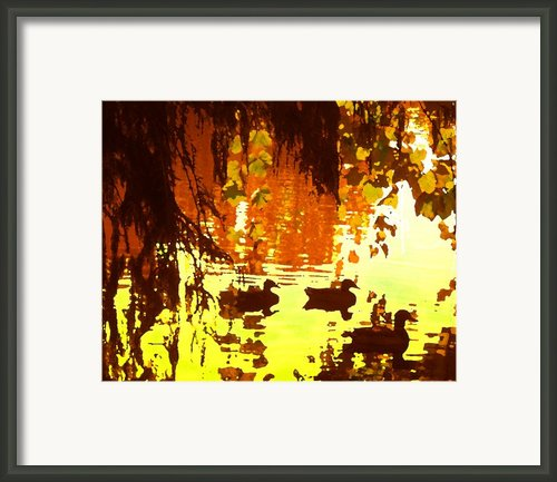 Ducks On Lake Red Light Framed Print By Amy Vangsgard