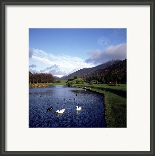 Ducks Swimming In The River, Silent Framed Print By The Irish Image Collection