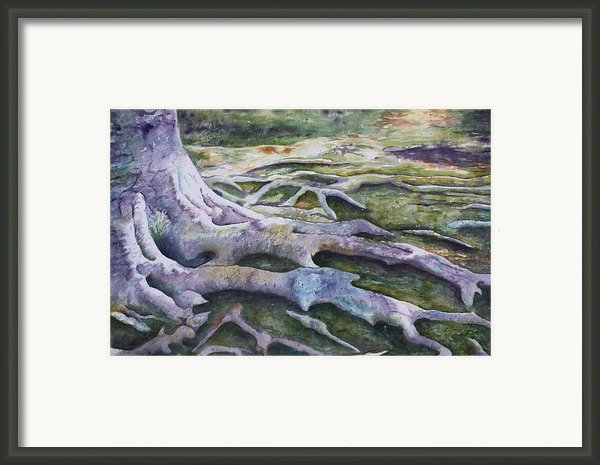 Dunbar Cave Roots  Framed Print By Patsy Sharpe