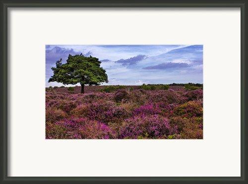 Dunwich Heath Suffolk Framed Print By Darren Burroughs