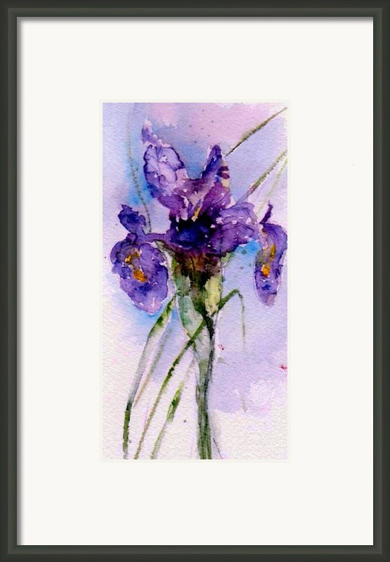 Dutch Iris Framed Print By Anne Duke