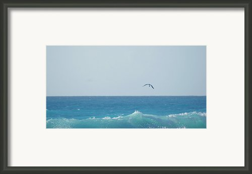Eagle Flying Over Sea Framed Print By Fabian Jurado