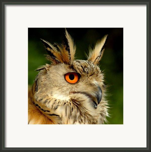 Eagle Owl Framed Print By Photodream Art