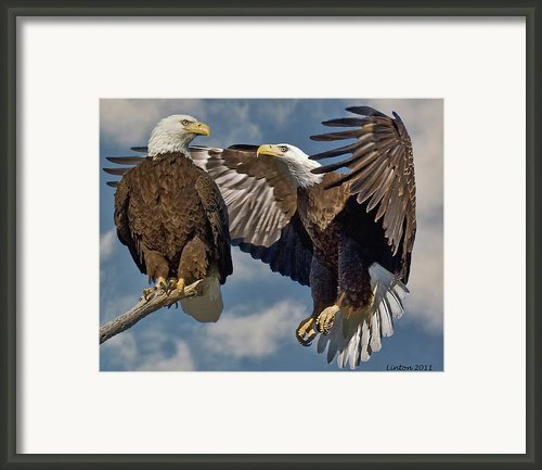 Eagle Pair 3 Framed Print By Larry Linton