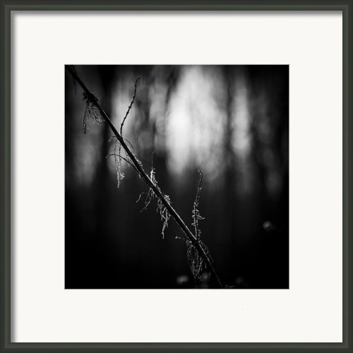 Early Light Framed Print By Mark Wright