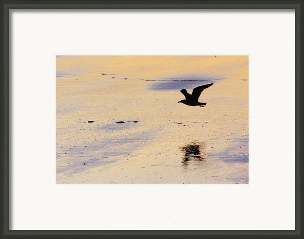 Early Morning Flight Framed Print By Rick Berk