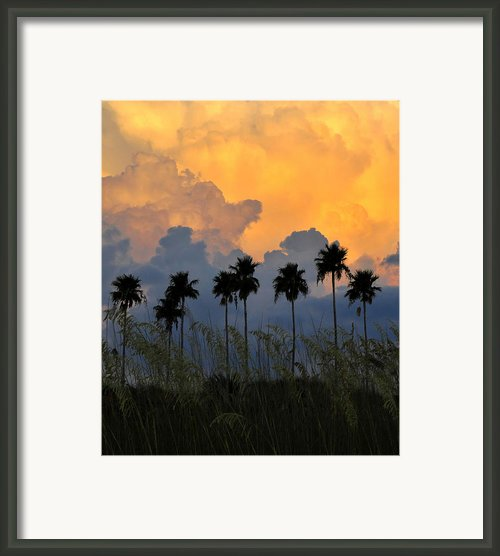 Eight Palms Framed Print By David Lee Thompson