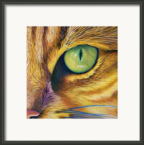 El Gato Framed Print By Brian  Commerford