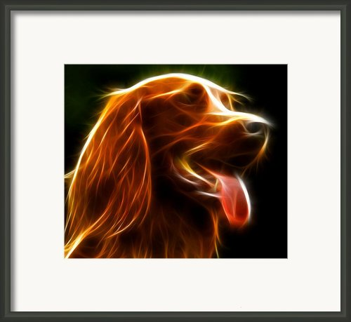 Electrifying Dog Portrait Framed Print By Pamela Johnson