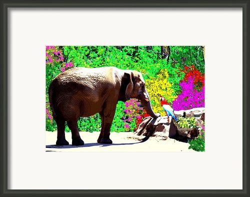 Elephant-parrot Dialogue Framed Print By Romy Galicia