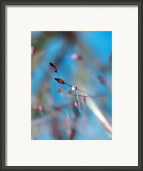 Emerge Framed Print By Lauren Radke