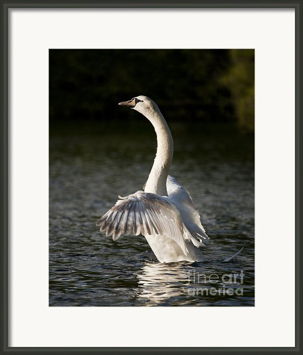 Emergence Framed Print By Richard Garvey-williams
