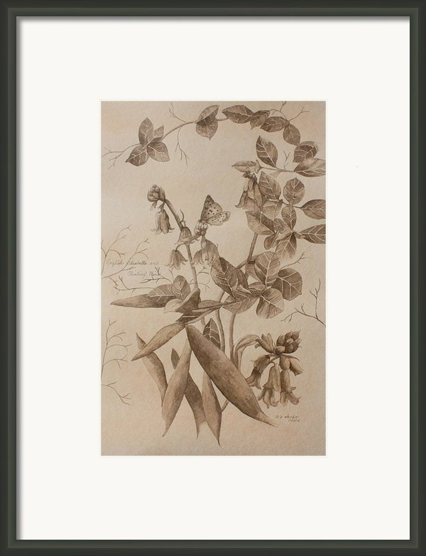 English Bluebells And Butterfly Framed Print By Patsy Sharpe