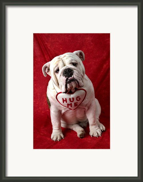 English Bulldog Framed Print By Garry Gay