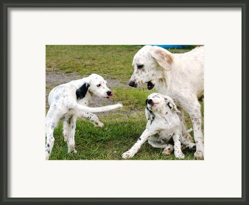 English Setter Fun Framed Print By Scott Hansen