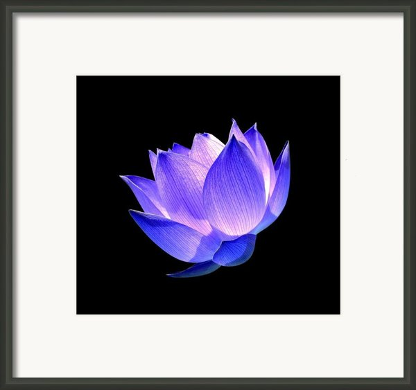 Enlightened Framed Print By Photodream Art