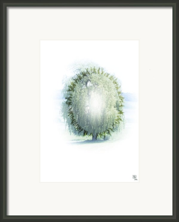Enlightment Of The Willow Framed Print By Nafets Nuarb