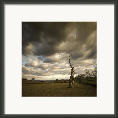 Ent Framed Print By Angel  Tarantella