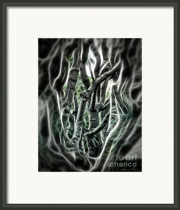 Entangled Worlds Framed Print By Danuta Bennett