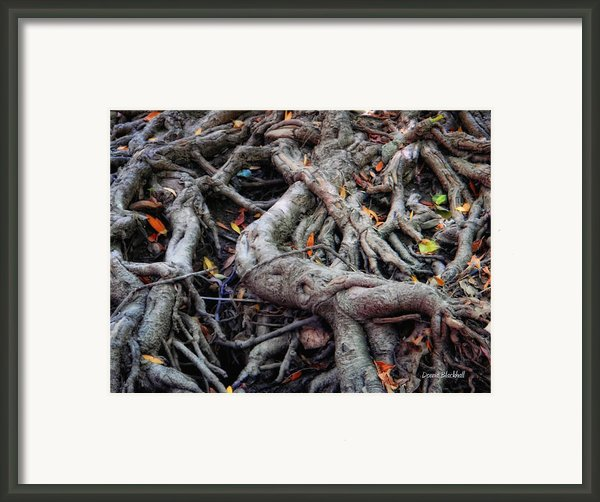 Entanglement Framed Print By Donna Blackhall