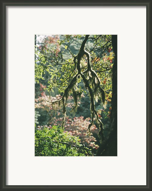 Epiphytic Moss Framed Print By Doug Allan