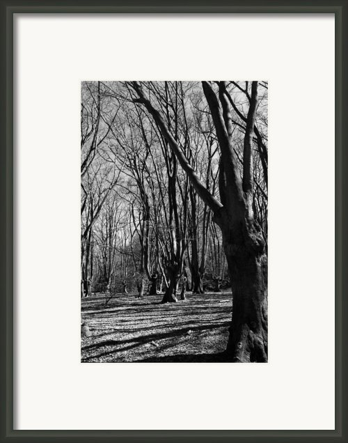 Epping Forest Framed Print By David Pyatt