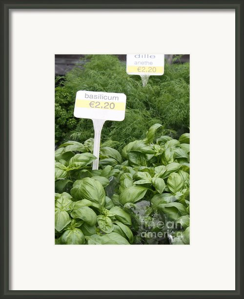 European Markets - Basil And Dill Framed Print By Carol Groenen