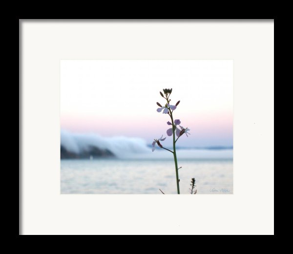 Evening Fog Rolling In Framed Print By Sabine Stetson