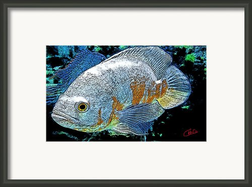 Exotic Fish  Framed Print By Colette V Hera  Guggenheim