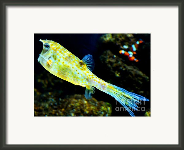 Exotic Fish Framed Print By Pravine Chester