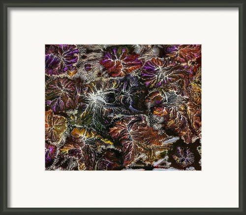 Extemporary Framed Print By Mark Bohnett