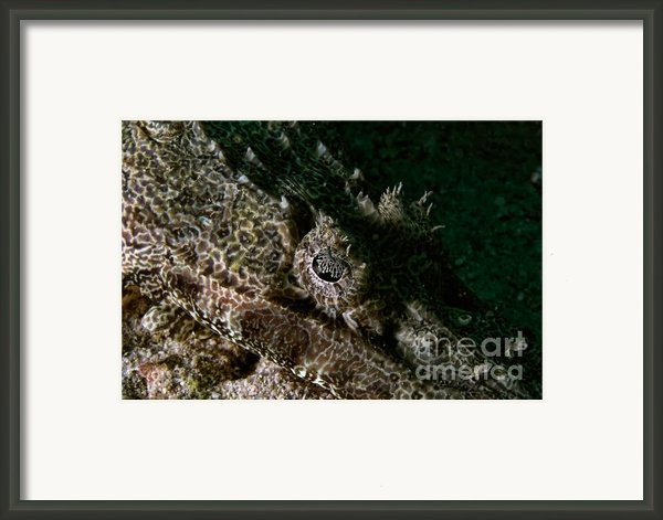 Eye In Eye Framed Print By Joerg Lingnau