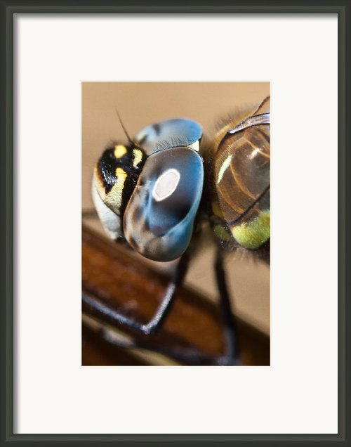 Eye Of A Dragonfly  Framed Print By Gert Lavsen
