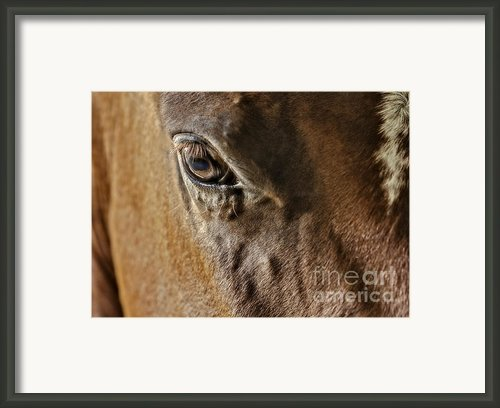 Eye Of The Horse Framed Print By Susan Candelario