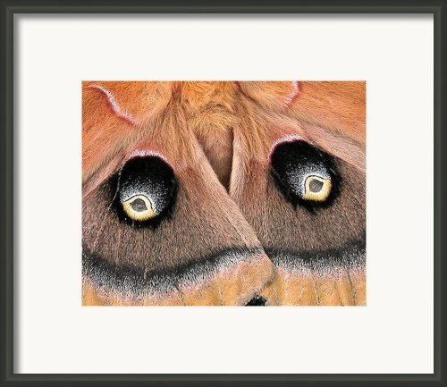 Eyes Of Deception Framed Print By Peg Urban