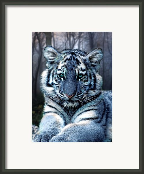 Fabled Framed Print By Julie L Hoddinott