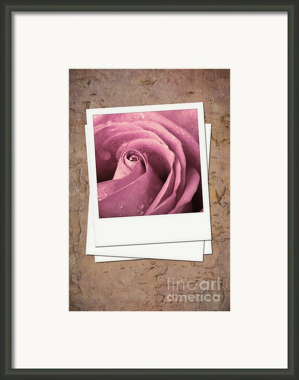Faded Rose Photo Framed Print By Jane Rix