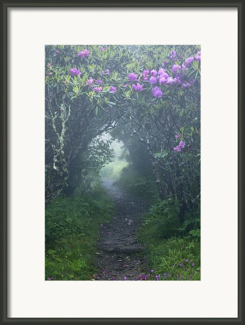 Fairy Path Framed Print By Rob Travis