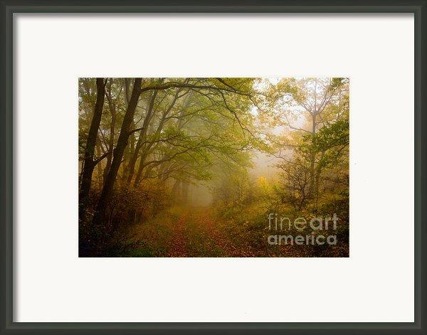 Fairy Wood Framed Print By Evgeni Dinev