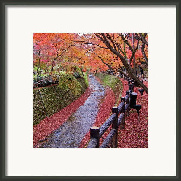 Fall Colors Along Bending River In Kyoto Framed Print By Jake Jung