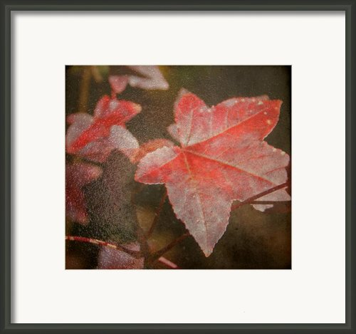 Fall Colors Framed Print By Jean Haynes