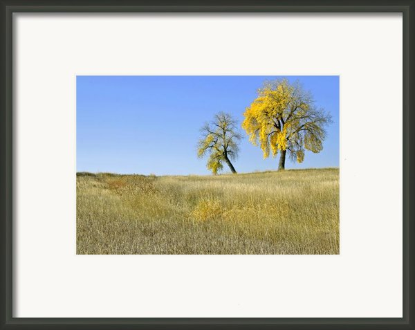Fall Days In Fort Collins Co Framed Print By James Steele