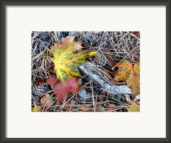 Fall Forest Floor Framed Print By Will Borden