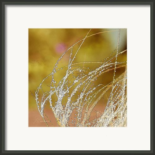 Fall Grass Framed Print By Author And Photographer Laura Wrede